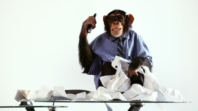 Chimp Clerk Calculator