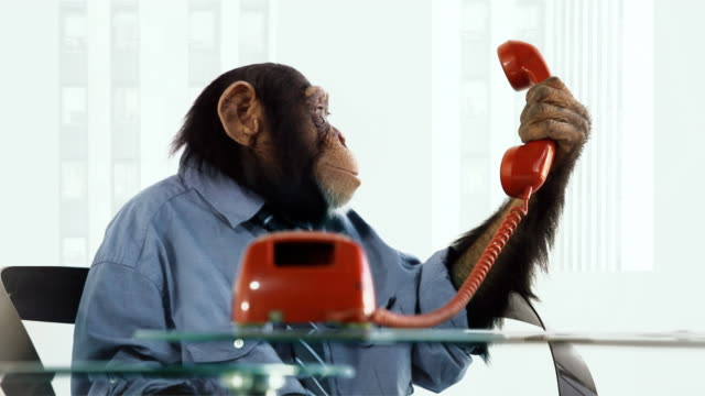 chimp help line - monkey stock videos & royalty-free footage