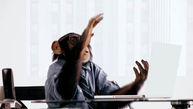 vídeos de stock, filmes e b-roll de chimpanzé laptop clapping - divertimento