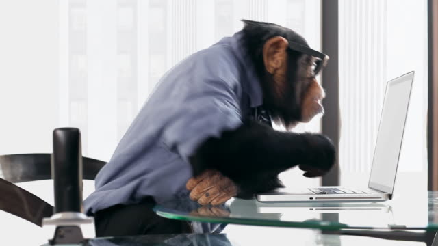 chimp laptop close - chimpanzee stock videos & royalty-free footage