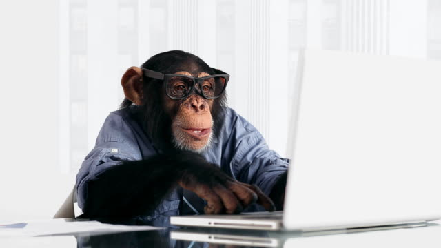 chimp laptop connection - monkey stock videos & royalty-free footage