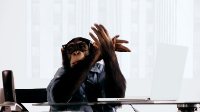 chimp laptop excited - monkey stock videos & royalty-free footage