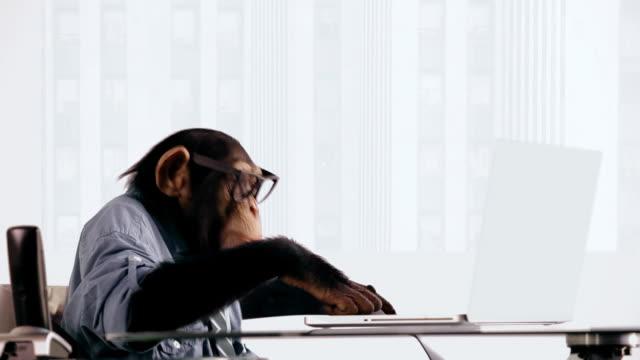 vídeos de stock, filmes e b-roll de chimpanzé laptop pesquisa - camisa e gravata