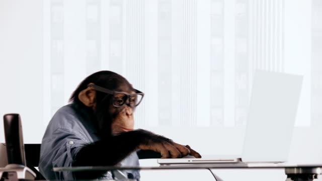 vídeos de stock, filmes e b-roll de chimpanzé laptop graves - camisa e gravata
