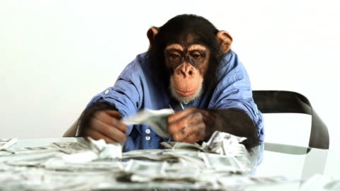 chimp money counting - monkey stock videos & royalty-free footage