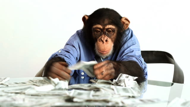 chimp money counting - monkey stock videos and b-roll footage