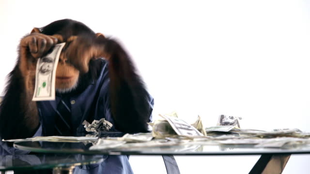 Chimp Money Desk