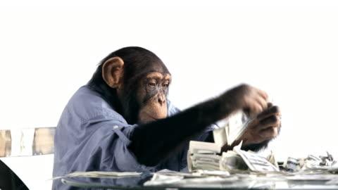 chimp money saving - monkey stock videos & royalty-free footage