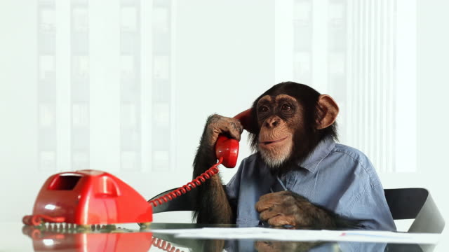 Chimp phone Bored