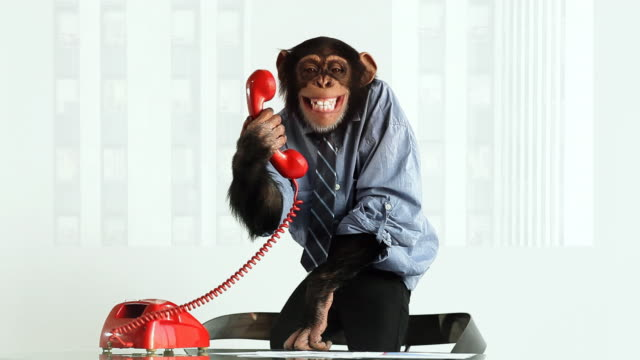 Chimp Phone Laughing
