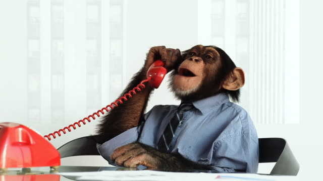 chimp phone service - chimpanzee stock videos & royalty-free footage