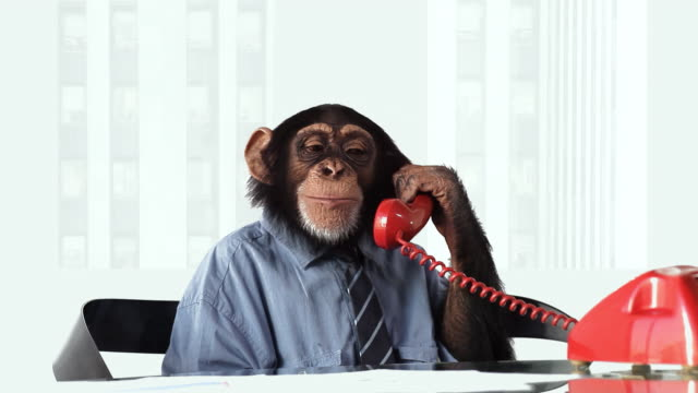 chimp phone smiling - monkey stock videos & royalty-free footage