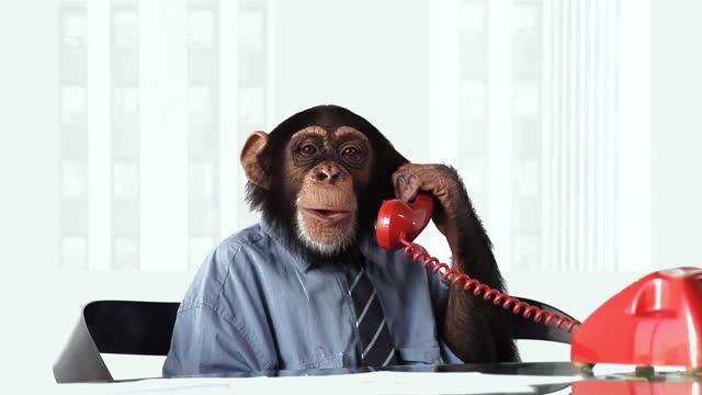 Chimp Phone Smiling