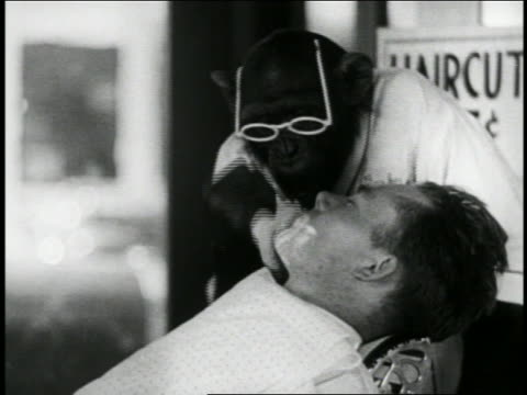 b/w 1939 chimpanzee barber putting lather on face of man / short - barber shop stock videos and b-roll footage