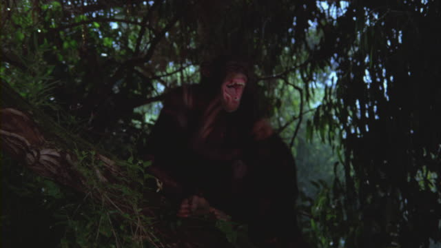 a chimpanzee helping its young one climb a tree. - aggression stock videos & royalty-free footage