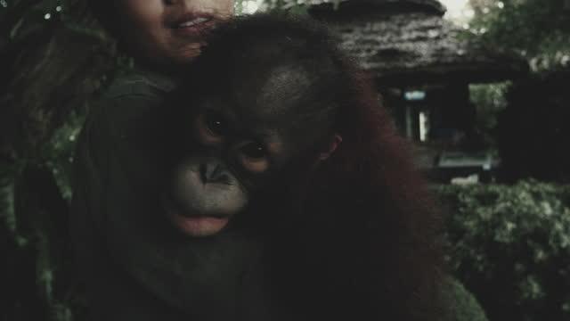 chimpanzee human - protection stock videos & royalty-free footage