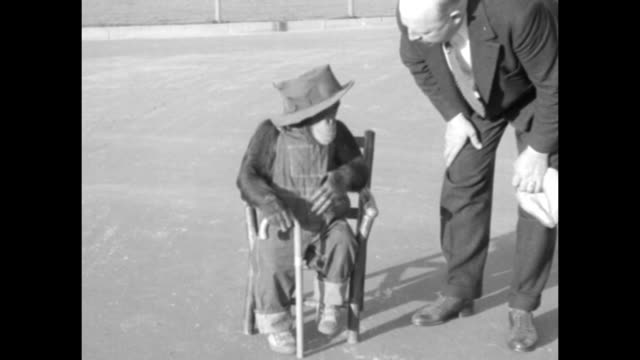 chimpanzee in bib overalls and a hat claps as he roller-skates to his trainer john millen / the chimp, now holding a cane, sits in a small chair and... - bib overalls stock videos & royalty-free footage