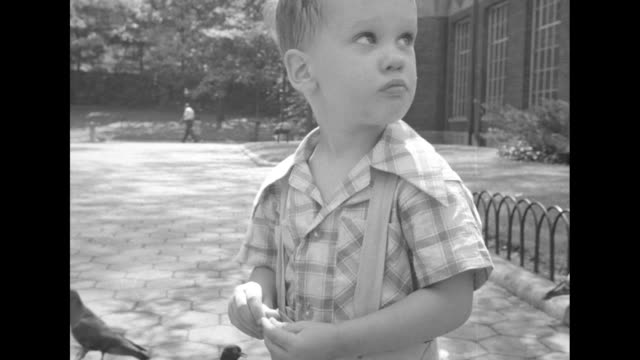 chimpanzee in cage / cu little boy looking into camera building in bg / people on walkway toddler in fg he turns around / boy feeding pigeons /... - central park zoo stock-videos und b-roll-filmmaterial