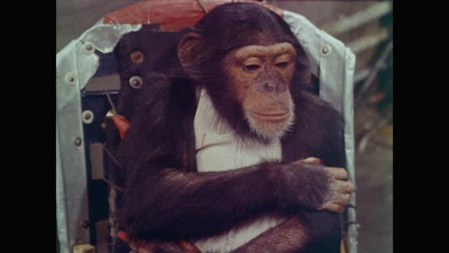 vídeos y material grabado en eventos de stock de chimpanzee is seated in a chair with wires attached to his feet as technicians prepare equipment - chimpancé