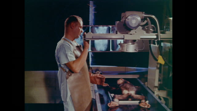 chimpanzee lays perfectly still for technician as he makes a body x-ray, jumping into his arms as soon as it is over - chimpanzee stock videos & royalty-free footage