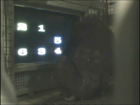 WGN Chimpanzees and gorillas behind glass cages play computer games at Lincoln Park Zoo on Dec 23 2014