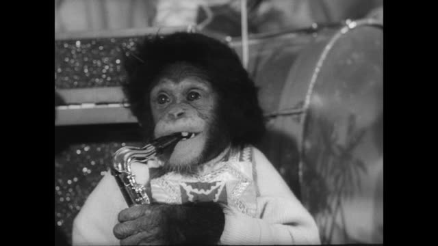 chimpanzees dressed in human clothes eating plates of fruit in front of crowd on new year's eve / children clap from behind barrier / chimpanzees... - 1965 stock videos & royalty-free footage