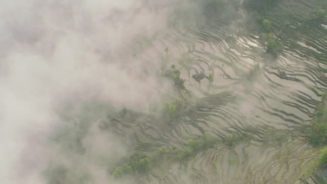 vídeos de stock, filmes e b-roll de china: aerial view of flooded rice paddies - rice paddy