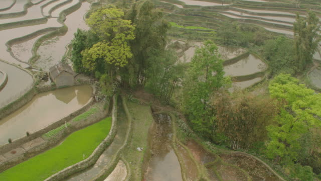 china: flooded rice paddies - yunnan province stock videos and b-roll footage