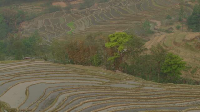 China: Flooded rice paddies