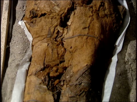 a chinchorro mummy lies on a concrete floor. - antiquities stock videos and b-roll footage