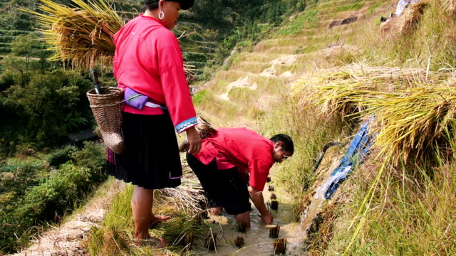 Chinese farmers in rice terraces