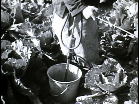 chinese farmers, workers spraying farm crop, plants in rows, postwar farming. imports: large packages carried on poles by men walking down railroad... - spraying stock videos & royalty-free footage
