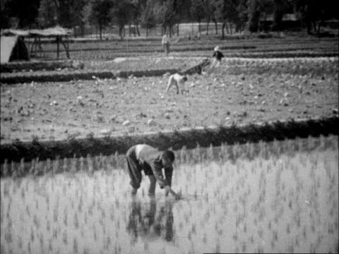 stockvideo's en b-roll-footage met chinese fisherman using birds to locate fish / rice paddy and farmers / human powered water wheels and water buffalo powered irrigation wheel - cormorant