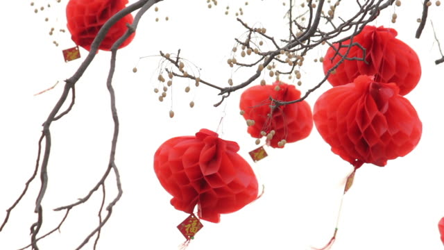 la ls chinese lantern festival celebrations on tree/xian,shaanxi,china - chinese lantern festival stock videos and b-roll footage
