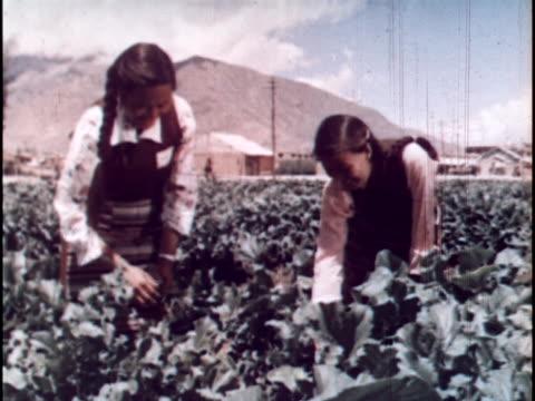 chinese made propaganda film of post rebellion life in tibet - propaganda bildbanksvideor och videomaterial från bakom kulisserna