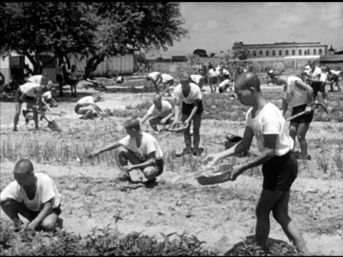 chinese nationalist soldiers planting watering crops in large field vs soldiers harvesting rows leafy vegetable greens ms basket vs shirtless... - shirtless stock videos & royalty-free footage