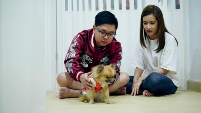 vídeos de stock, filmes e b-roll de ano novo chinês de asiáticos casal com animal de estimação - pet clothing