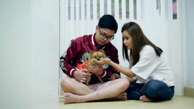 chinese new year of couple with pet - pet clothing stock videos & royalty-free footage