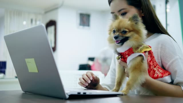 chinese new year of woman with pet - pet clothing stock videos & royalty-free footage