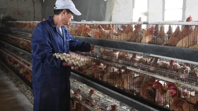 chinese poultry hatchery, china. - 家禽点の映像素材/bロール
