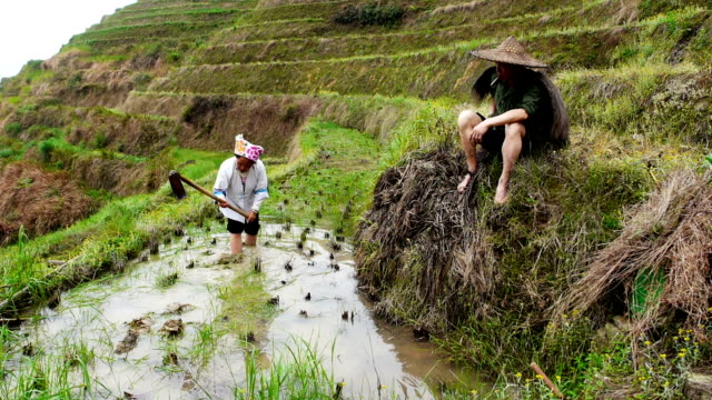 Chinese rice farmers
