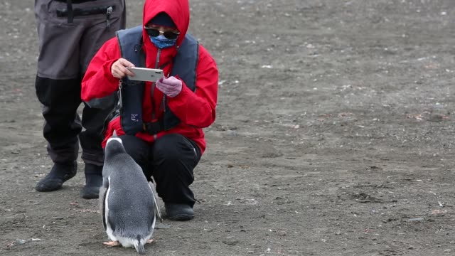 chinese tourists watching gentoo penguins at elephant point, livingston island, south shetland islands, antarctica. - environmental issues stock videos & royalty-free footage