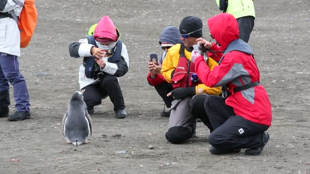 chinese tourists watching gentoo penguins at elephant point livingston island south shetland islands antarctica - east asian ethnicity stock videos & royalty-free footage