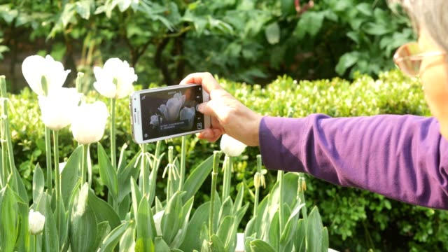 vidéos et rushes de chinese woman takes photo of flowers in the park in beijing city - parterre de fleurs