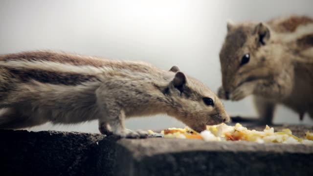 vídeos y material grabado en eventos de stock de ardillas comiendo. - luchar