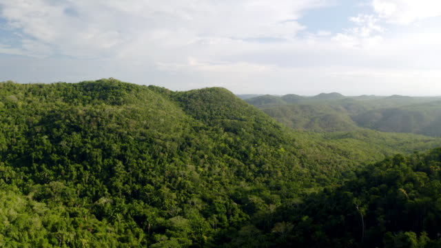 chiquibul national park in belize - rainforest stock videos & royalty-free footage