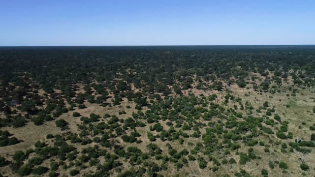 chobe national park. aerial view - grass area stock videos and b-roll footage