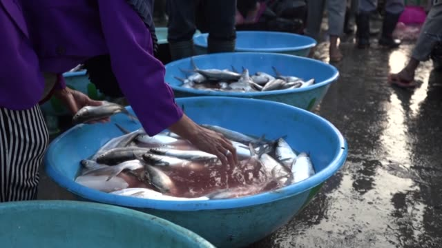 choosing fresh fish at market - alternative energy stock videos & royalty-free footage