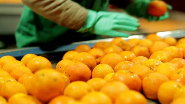 scegliere i frutti nell'industria arancione - arancione video stock e b–roll