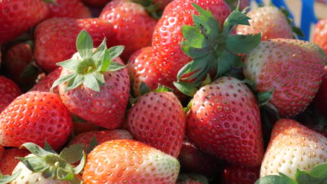 choosing the best strawberries , 4k(uhd) - plank variation stock videos & royalty-free footage